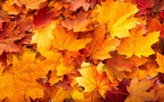 autumn-leaves-quotes-wallpaper-2